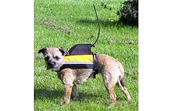 GPS-liivi Garmin Astro Koirapannalle